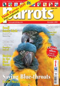 Parrots cover